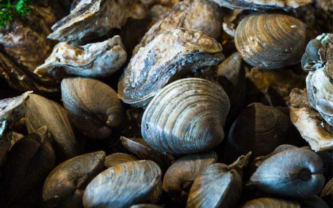 Flo's Clam Shack, seafood, restaurant, Rhode Island, seafood restaurant, clams